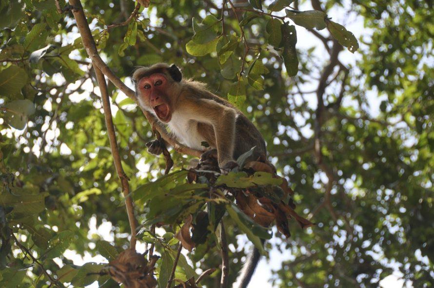 monkey-20182_960_720
